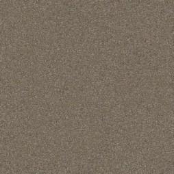 11652 Gray Fox